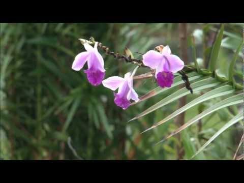 Fiji Spice Gardens