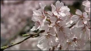 花嫁人形 金襴緞子の〜 童謡・唱歌名曲集 Cover 華之将