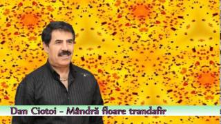 Dan Ciotoi - Mandra Floare, Trandafir