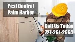 Palm Harbor FL Pest Control - Residential Termite Control & Bed Bug Treatment 24 Hr Exterminator