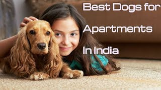 Top 10 apartment dogs in India