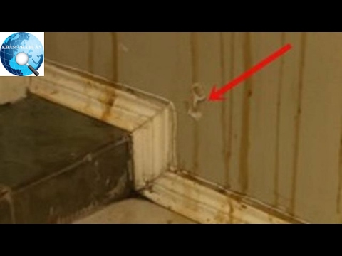 Thấy đầy mật ong trên tường nhà, người phụ nữ phát hiện sự thật kinh hoàng