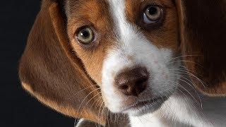 Собаки гораздо сообразительнее, чем утверждают ученые