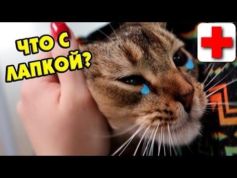 Болит у кота лапа