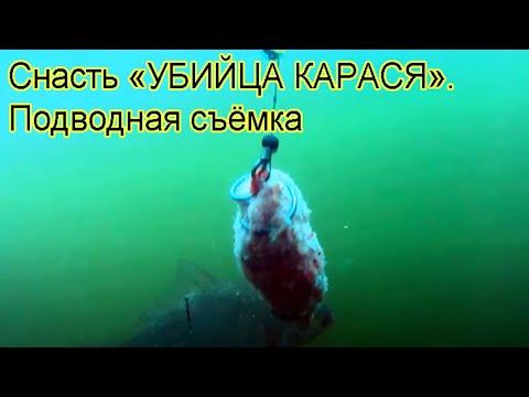 Ловил на донку с кормушкой. Подводная съемка, рыбалка. Ловля карася на озере Карасун. Fishing