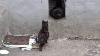 Кот и кошка гуляют во дворе весной