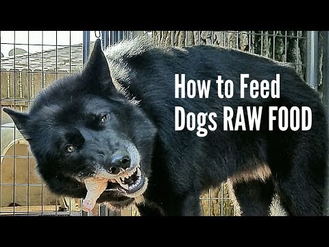 RAW Food Feeding Guide for Dogs - K9 Mukbang