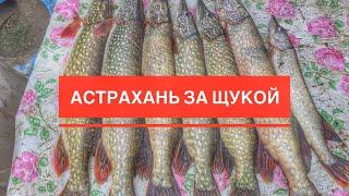 Рибалка в Астрахані, Камызякский Район, Щука