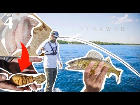 SUCKER FISH Vs PERCH Catch & Cook   Live Worm Bottom Fishing
