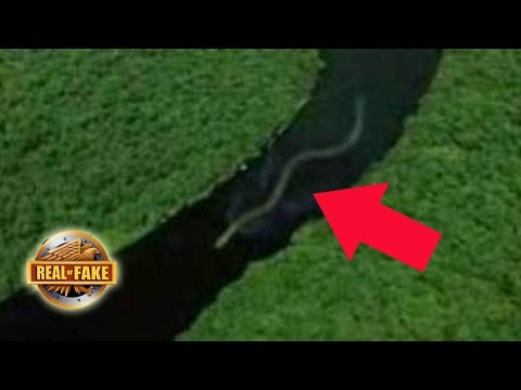 WORLD'S BIGGEST SNAKE DISCOVERED - real or fake?