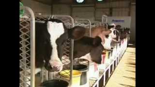 From Moo to You: The Story of Milk