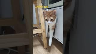 고양이 습성 열린 수납…