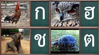 Repeat youtube video เพลง ก เอ๋ย ก ไก่ เพลงเด็ก  แบบดั้งเดิม ภาพจริง จำง่าย สนุกๆ - Learn Thai Alphabet