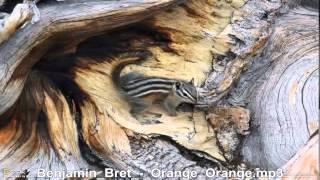 Benjamin Bret   Orange Orange
