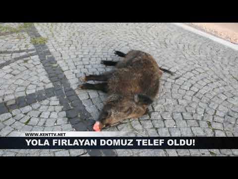 YOLA FIRLAYAN DOMUZ TELEF OLDU!