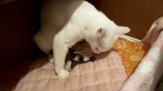 Родила? Сколько? Имена.....На 65 день кошка родила.