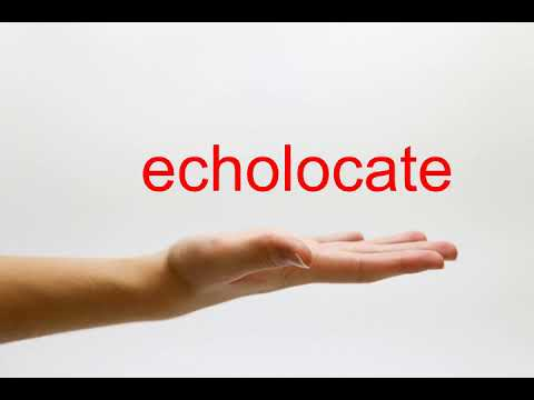 How to Pronounce echolocate - American English