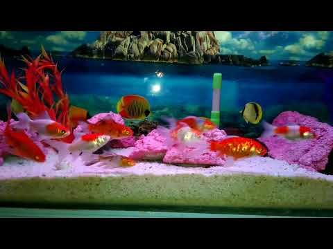 My Fish Tank Update | New Family Ane Wali Hai Ab