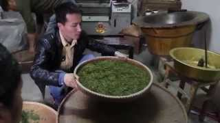 LongWu Dragon Well Grading Process, West Lake, Hangzhou Zhejiang China