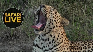 safariLIVE - Sunrise Safari - May, 23. 2018