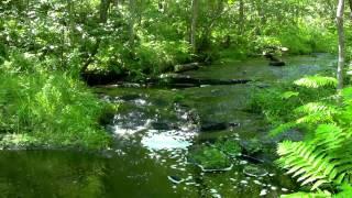 أصوات خرير الماء و الطيور للطبيعة الخلابة المهدئة للأعصاب و المريحة للنفس