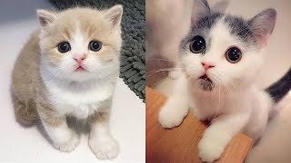 Look At That Face 😻   Cute Cat Video 2019  Kitten Video 2019