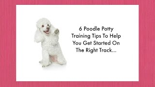 Potty Training Your Poodle Puppy 6  Poodle Housebreaking Tips Puppy Potty Training Made Simple
