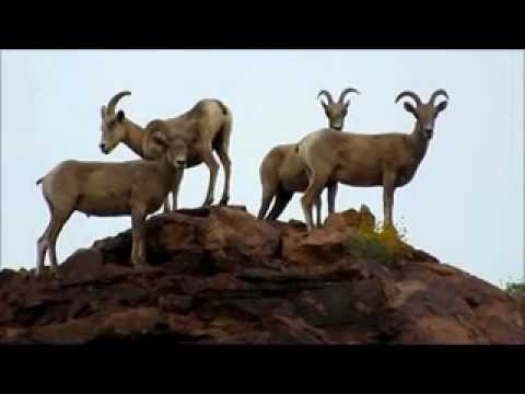 bighorn video2_WMV V9