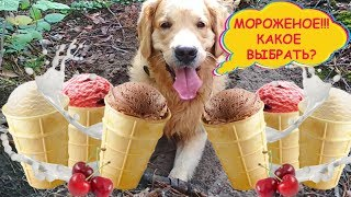 Дешевое мороженое против дорого ☀️  Что выберет собака ☀️ Эксперимент