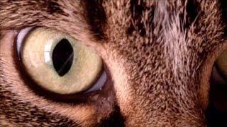 Jazz cats (advertising music)