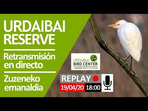 retransmisión-en-directo-2020-04-19,-sesión-de-tarde-(18:00)