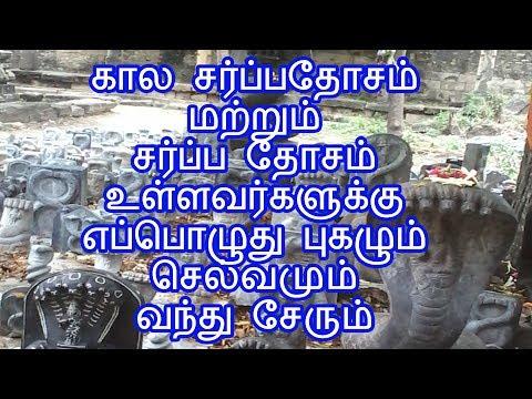கால சர்ப்பதோசம் மற்றும் சர்ப்ப தோசம் உள்ளவர்களுக்கு எப்பொழுது புகழும் செல்வமும் வந்து சேரும்