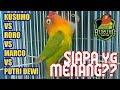 Lovebird Kusumo Vs Roro Vs Marco Vs Putri Dewi Semua Ngekek Panjang Siapa Yg Juara  Tembakan(.mp3 .mp4) Mp3 - Mp4 Download