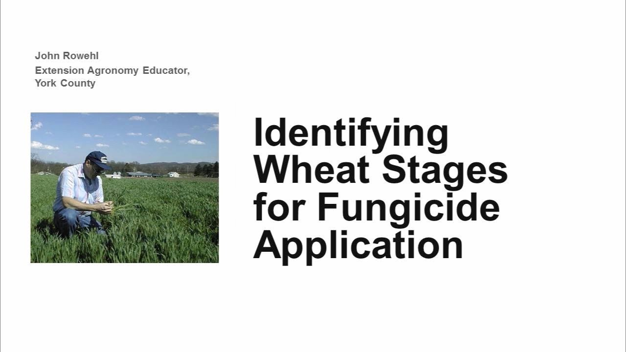 Identifying Wheat Stages for Fungicide Application