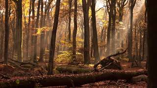 Amazing Grace | Relaxing Harp Music | Instrumental Traditional Music ★9