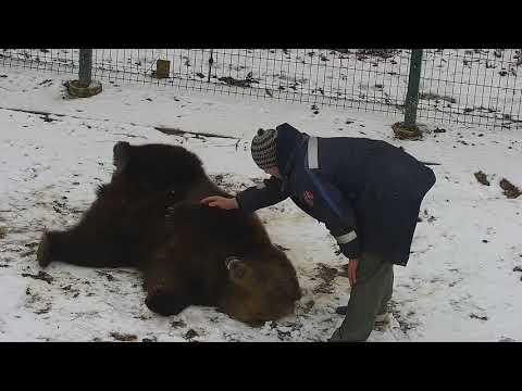 Видео: Как Андрей играет с Мансуром