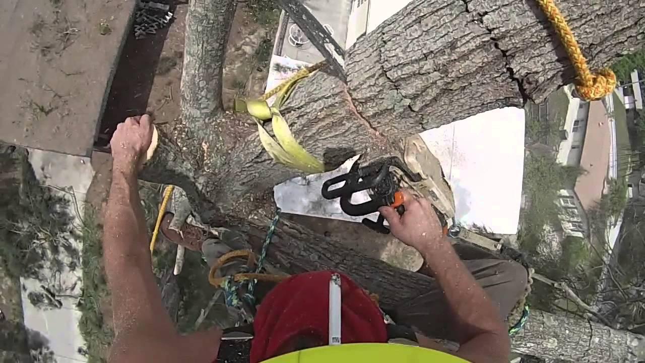 Gopro Australian Pine Removal Climber Pov