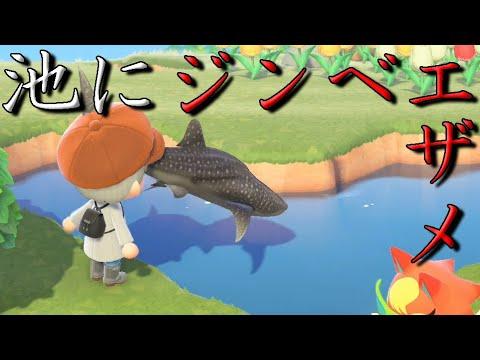 魚 森 どうぶつ レア とびだせ の