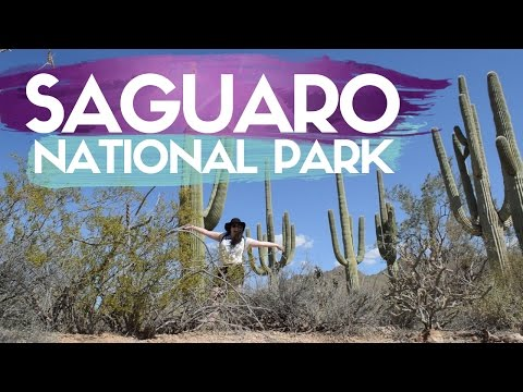 SAGUARO NATIONAL PARK // TUCSON TRAVEL GUIDE
