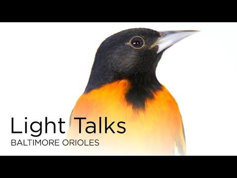 Light Talks: Baltimore Orioles