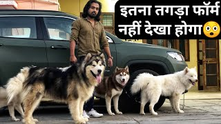 BEST DOG KENNAL|Alaskan Malamute Siberian Husky At The Dogfather|Dog Price in India