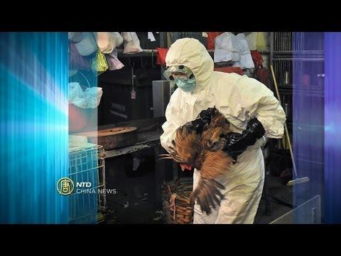 China News - Bird Flu Death, Hong Kong Election, Property Prices - NTD China News, April 1, 2013