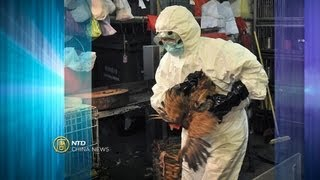 China News - Bird Flu Death, Hong Kong Election, Property Prices - NTD China News, April 1, 2013