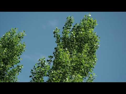 Still Life - Trees 01