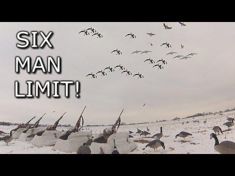 Six Man Goose