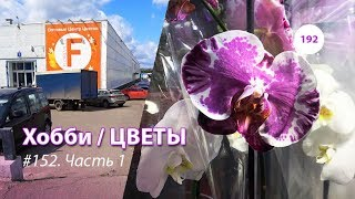 192#152 / Хобби-Цветы / 08.2019 - Floreville (ФЛОРЭВИЛЬ. МОСКВА). ЧАСТЬ 1