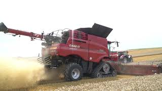 "Nowy Case IH AxialFlow 8250 z nietypowym hederem ""draper"" | FARMER.PL"