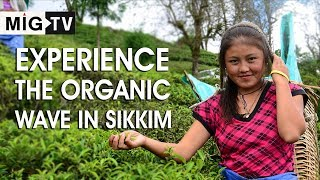 Experience the organic wave in Sikkim