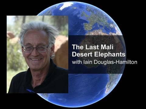 The Last Mali Desert Elephants