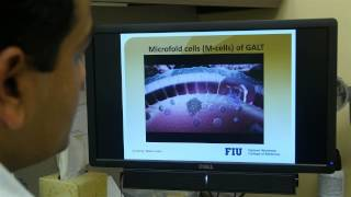 Nanomedicine-based Anti-hiv Drug Delivery Targeting M-cells – Video Abstract 68348